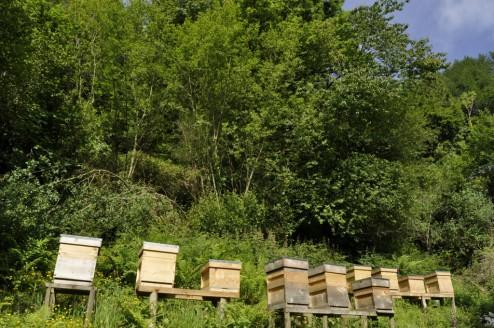 10 Hives